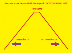 Fases-biológicas-da-resposta-sexual-humana-01