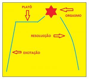 Fases-biológicas-da-resposta-sexual-humana-03